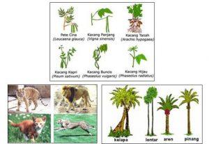 Keanekaragaman Gen, Jenis, dan Ekosistem