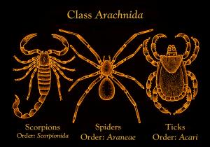 Kelas Arachnida
