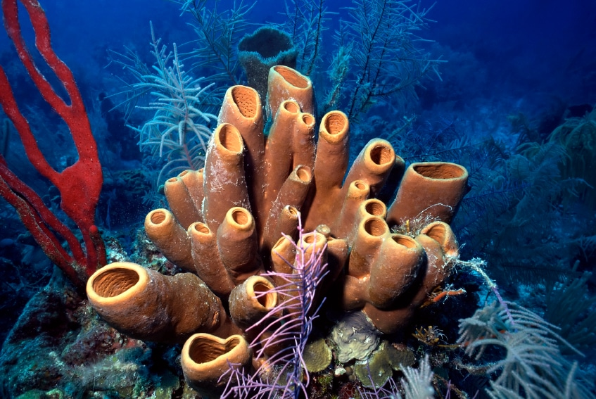 640+ Gambar Dan Nama Hewan Porifera HD Terbaik