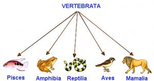 vetrebrata