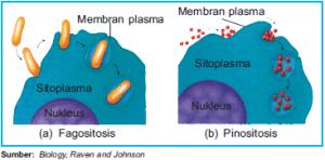 Endositosis