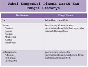 kandungan plasma darah