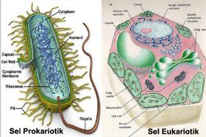 sel-prokariotik-dan-eukariotik