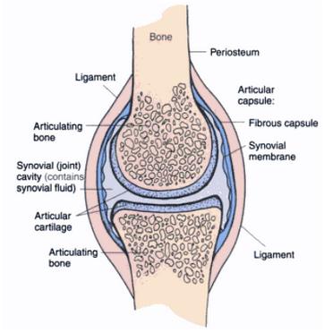 Cara menyembuhkan lutut memar