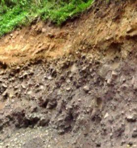Tanah Podsol