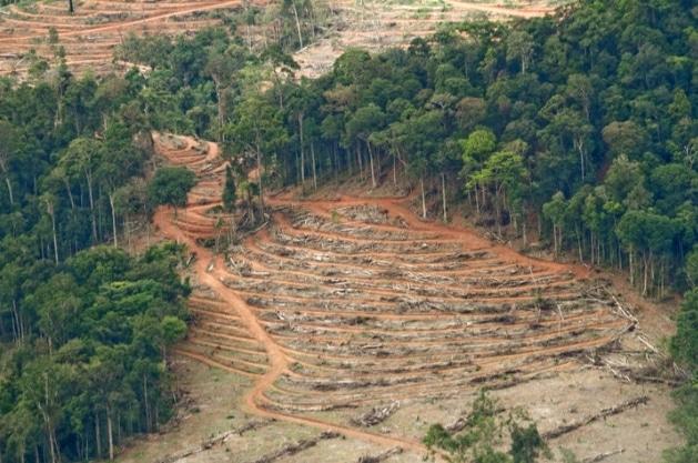 6400 Koleksi Gambar Lingkungan Hidup Hewan Dan Tumbuhan Terbaru