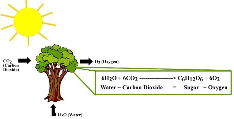 Reaksi terang dan gerak fotosintesis 68