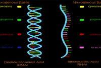 DNA dan RNA