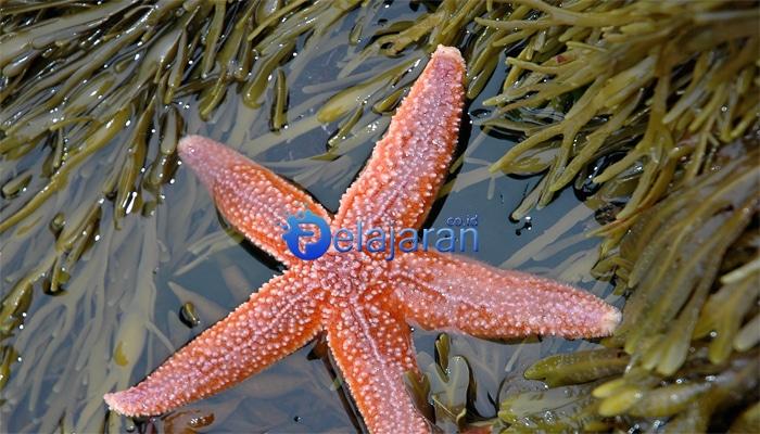 91 Koleksi Gambar Hewan Berpori (Porifera) HD