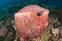 102+ Gambar Hewan Porifera Dan Namanya Terbaik