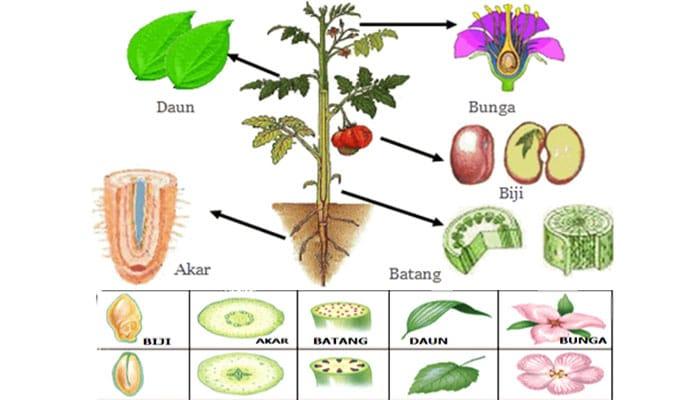 Sistem Organ - Ruang Science